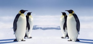 lifelist-antarctica-631