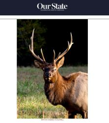 won-cataloochee-elk-our-state-fall-contest