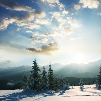 solstice trees