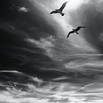 flying birds_b&w_serge-le-strat-QkMqoLwhdnY-unsplash_800SQ