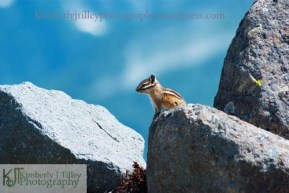 a chipmunk ontop of a large rock