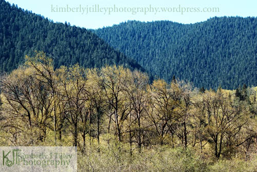Trees in golden hues and emerald green colors