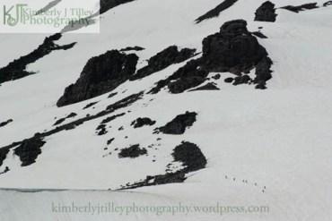 people hiking Mount Rainier