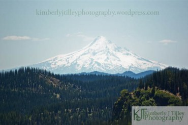 mount hood towers over the native landscape of Washington