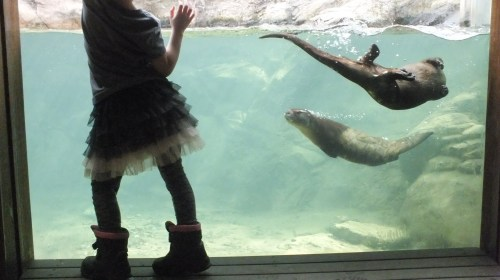 She can dance with otters, but she can't look them up in her Junior dictionary.