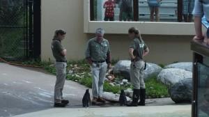 Toronto Zoo penguins await their orders
