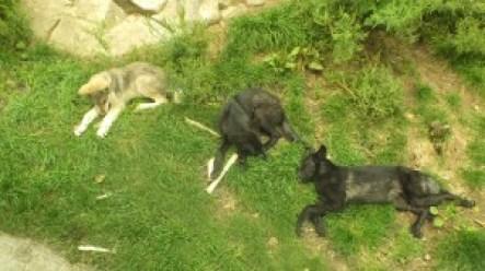 Logan, Lonestar, Luna and/or Leila (Aug 2011)