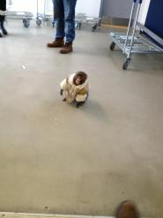 Darwin at Ikea (Bronwyn Page)