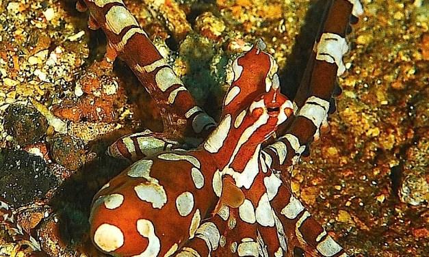 Beautiful Sunday: One Sexy Cephalopod