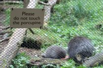 Porcupines at Woodland Park Zoo. (June 2014)
