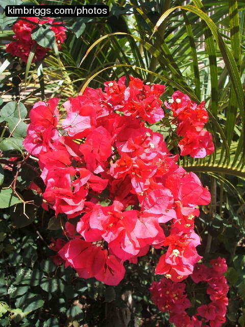 Tropical Flowers Photos St John USVI