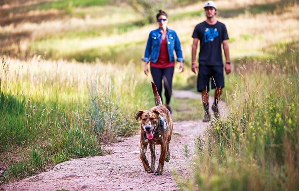 How to entertain, what to feed and where to go with your mountain pooch