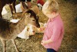 Will petting zoo