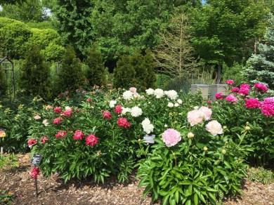 Flowers Botanica Gardens