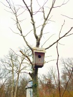 birdhousehome4