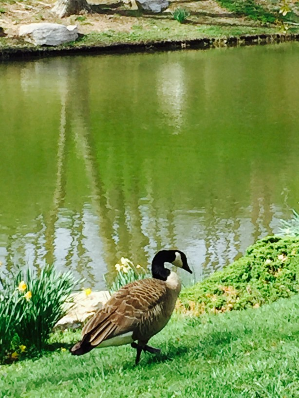 park duck pond
