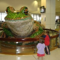Green and Golden Bell Frog @ Sydney Airport