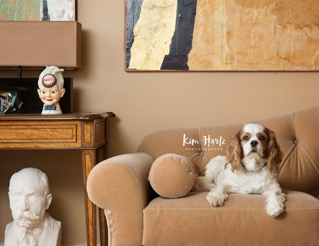 pet photography, cavalier, dog photographer, pet portraits