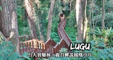 南投鹿谷住宿-台大實驗林,蟬說鳳凰亭序,櫻花、茶花陪伴與台灣自然生態共眠!