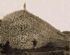 Bison skulls pile to be used for fertilizer, 1870