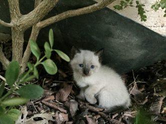 kitties-1813