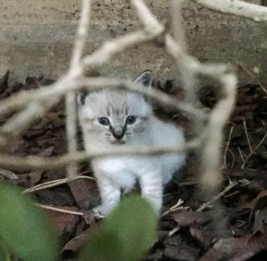 kitties-1814