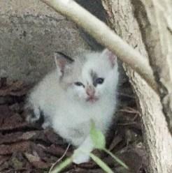kitties-1820