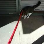 猫の散歩 猫にリードをつけてみる