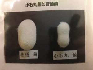 小石丸繭の写真