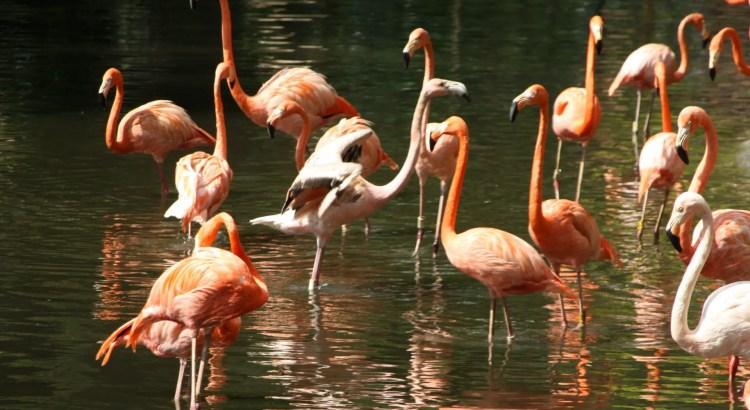flamingo cali zoo