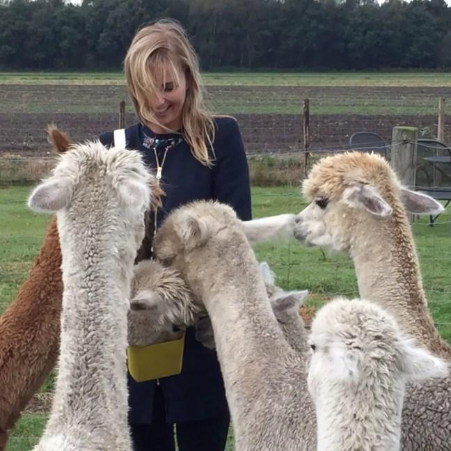 Alpaca's voeren