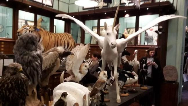 Deyrolle: opgezette dieren winkel
