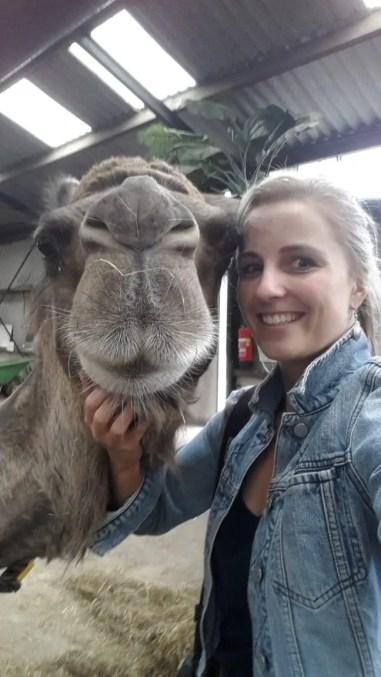 Een kamelenselfie