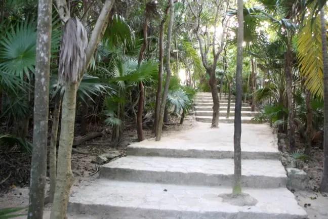 Tropische begroeiing verwelkomt je in de oude Maya stad.
