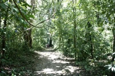 Wandelen door de jungle op zoek naar de verloren tempel