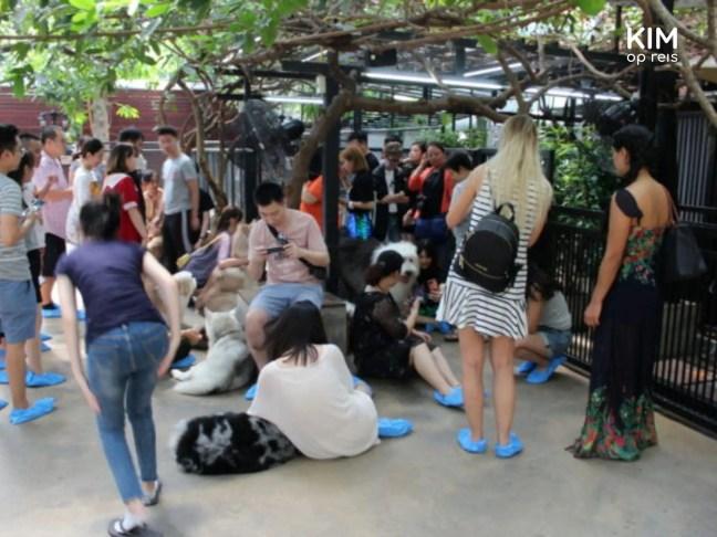 De rij voor de foto bij het hondencafé in Bangkok