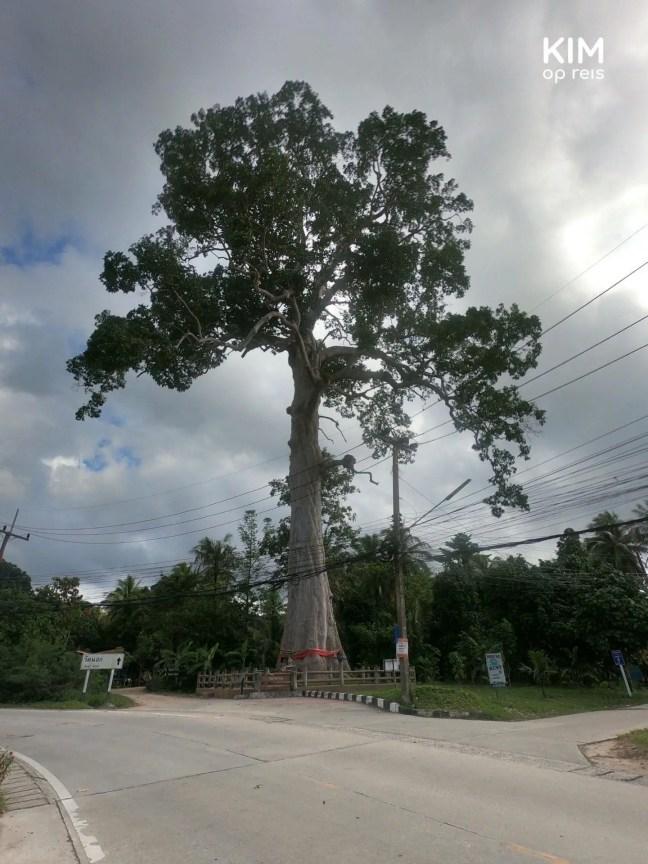 Yang Na Yai boom op Koh Phangan