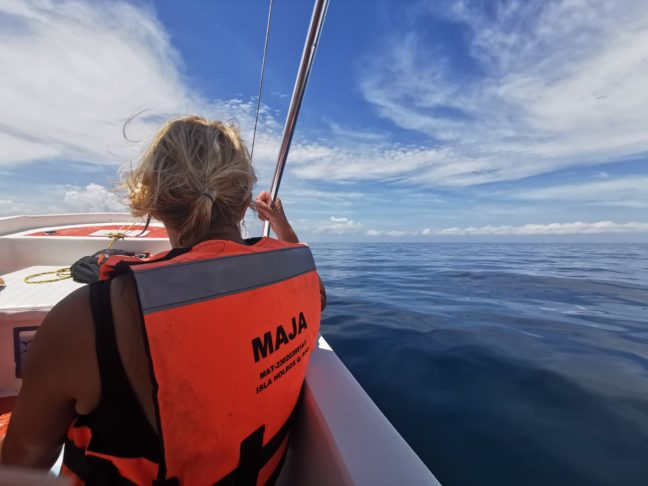 Op de boot zoeken naar walvishaaien