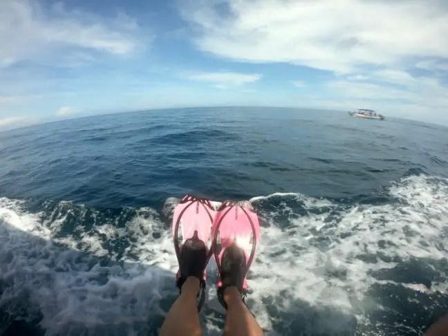 Klaar om te zwemmen met walvishaaien