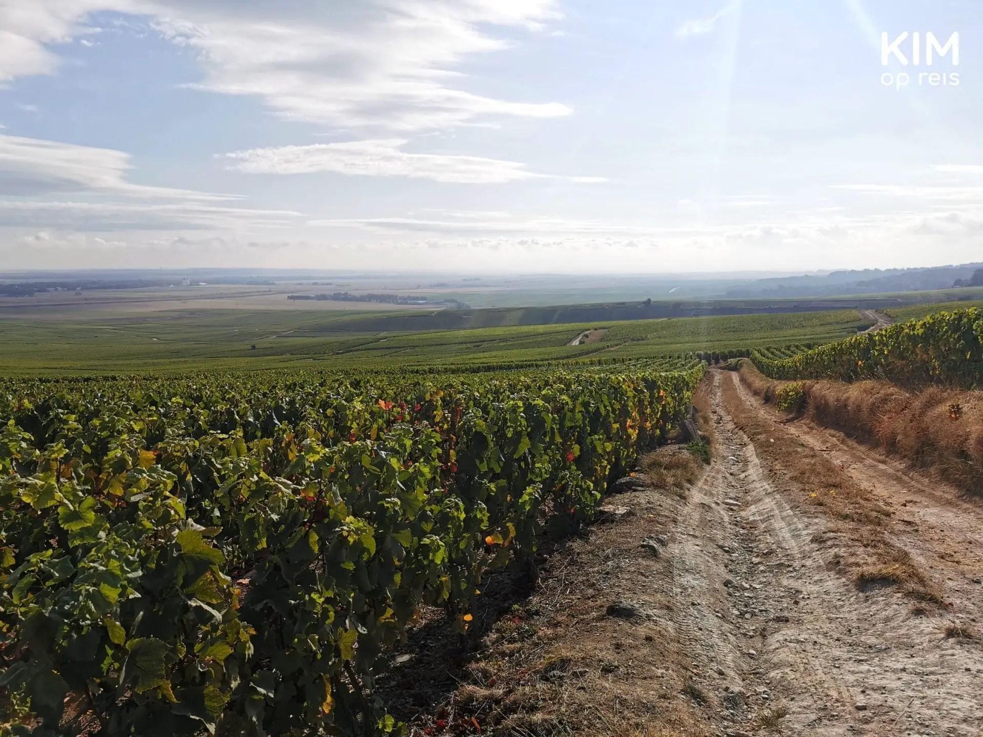 Uitzicht Le Phare champagnestreek: uitzicht over heuvelachtige wijngaarden