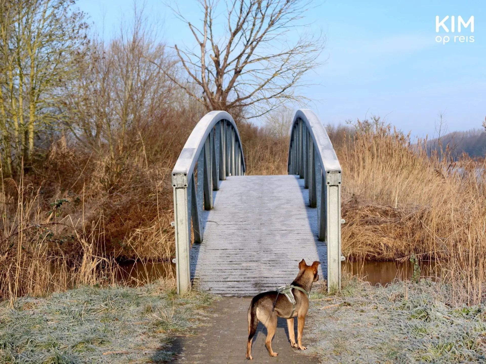 Stadsbossen Almere wandelroute hond brug: hond staat voor een bevroren brug te wachten