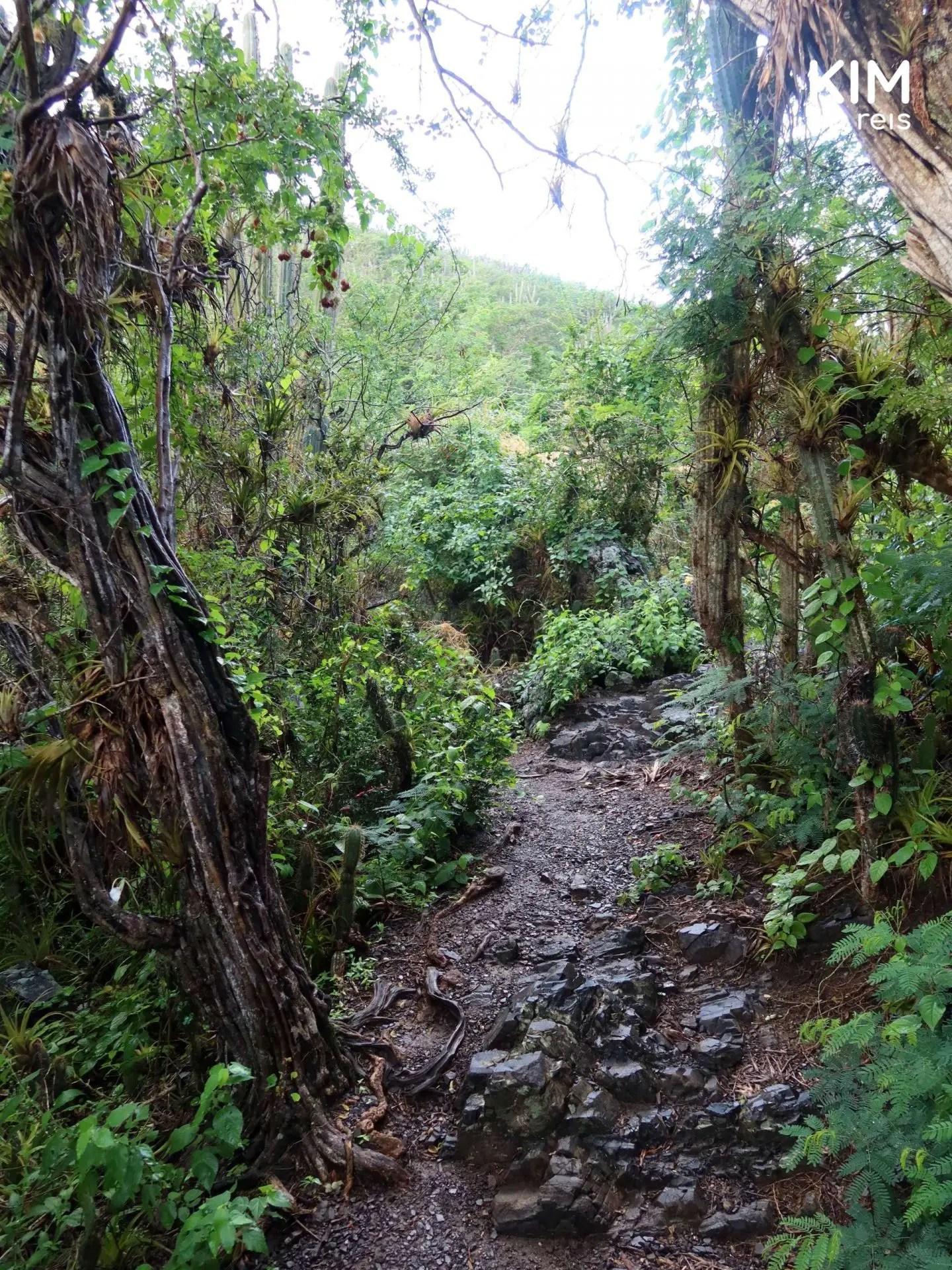 Flora en fauna Christoffelpark Curaçao