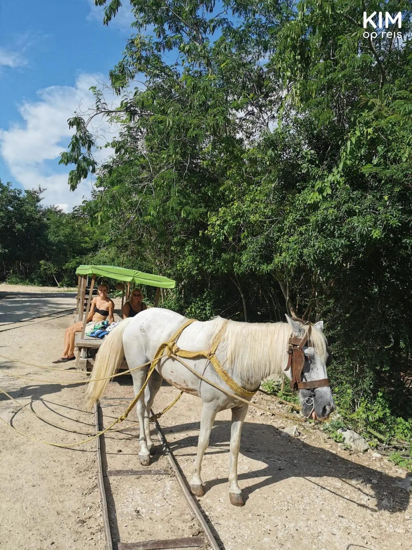 Paard spoor Santa Barbara: mijn moeder en ik op de paardenkar met een wit paard ervoor