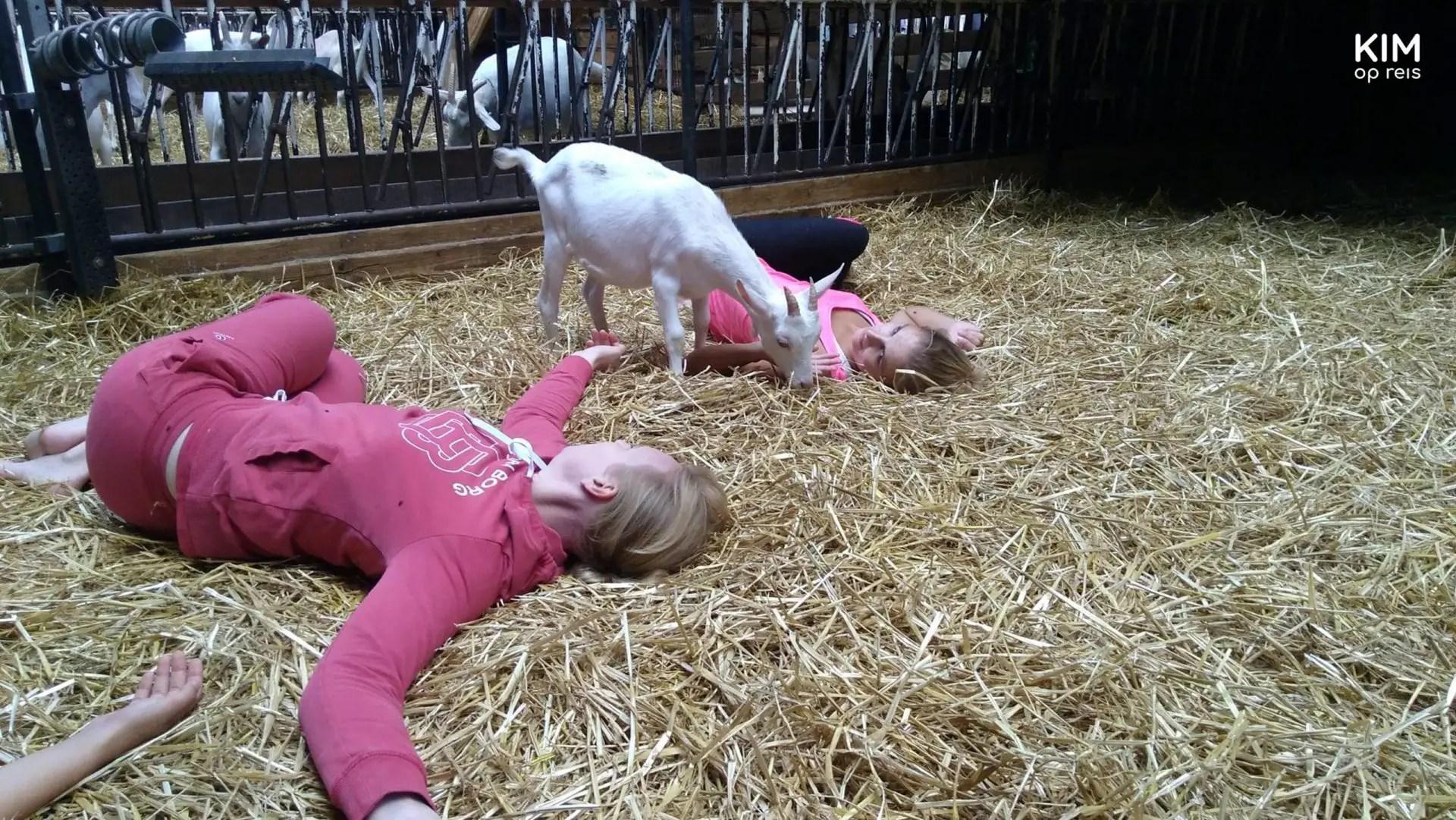Geitenyoga op de geitenboerderij in het Amsterdamse Bos