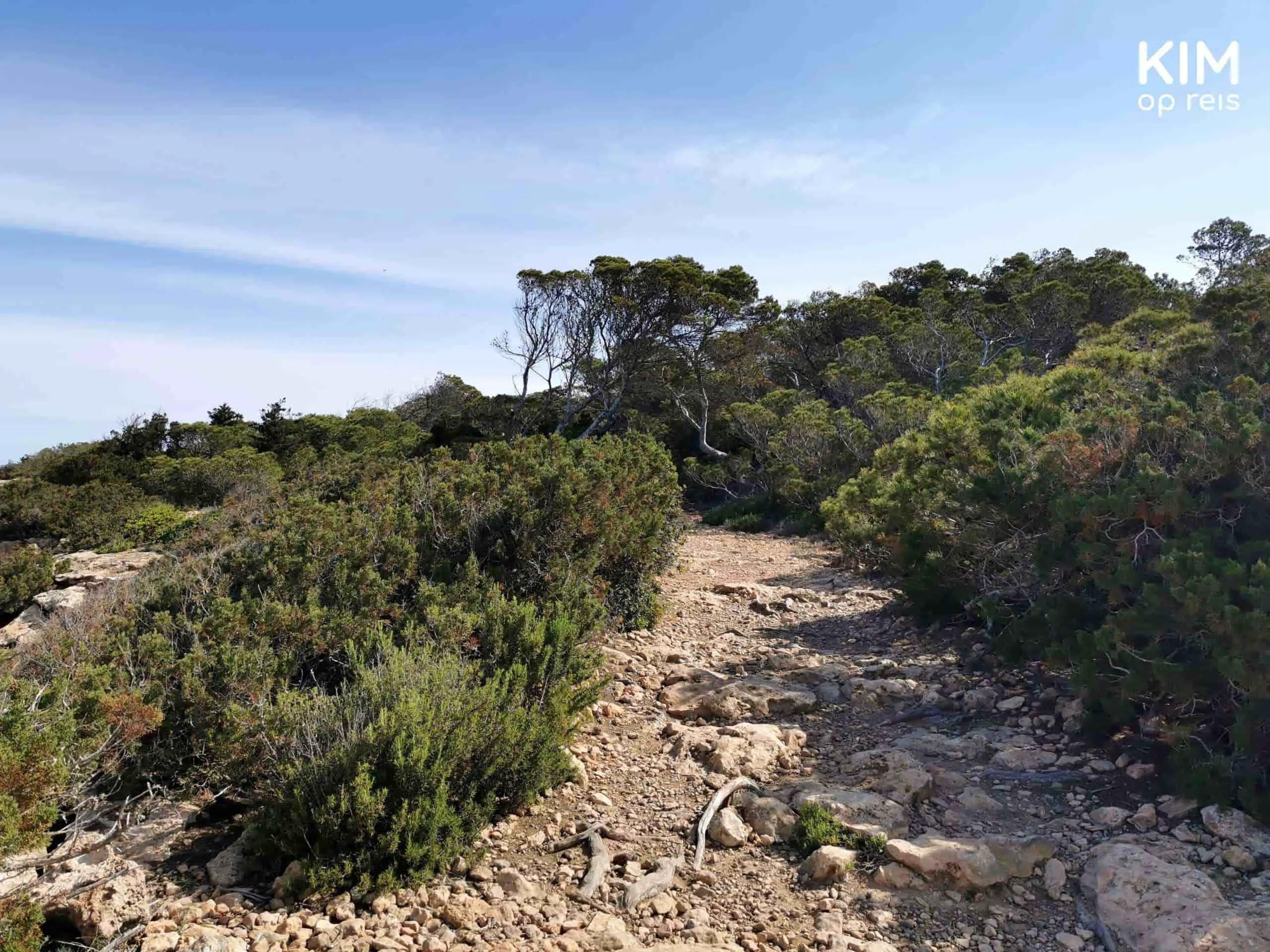 Wandelen Torre d'en Rovira wandelpad: wandelpad langs de kust met struiken aan alle kanten