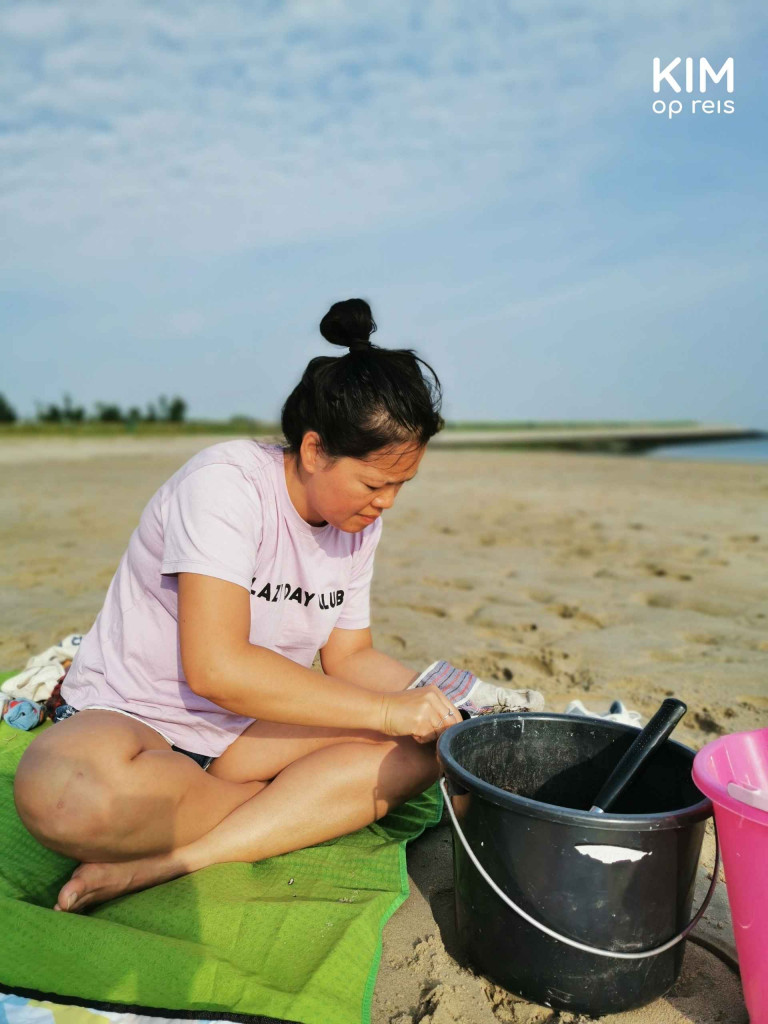 Oyster picking Zeeland: woman opens oyster