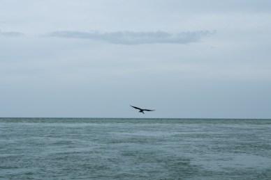 FUJI GFX50s, ocean, bird