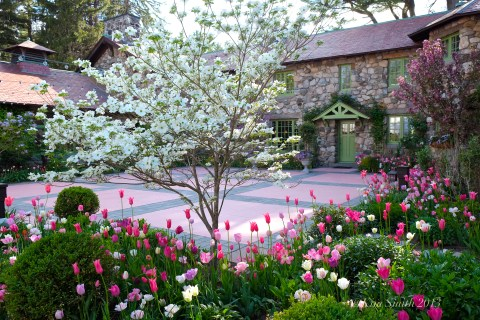 Spring Tulips ©Kim Smith 2013