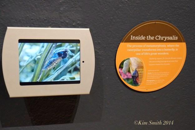 Berkshire Museum ©Kim Smith 2014 -2