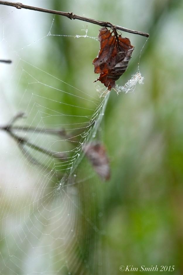 Spider web Clark Pond ©Kim Smith 2015.JPG